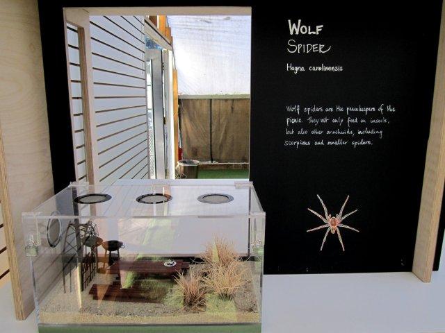 Wolf Spider display